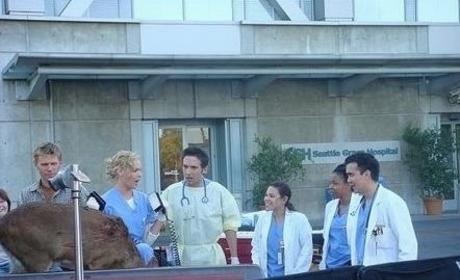 Izzie Stevens, New Interns on the Set