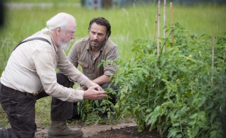 The Walking Dead Season 4 Premiere Pics: Peace at the Prison?
