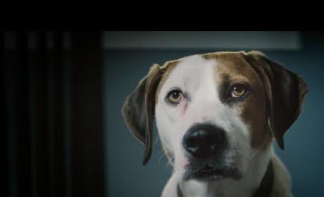 Downward Dog Trailer
