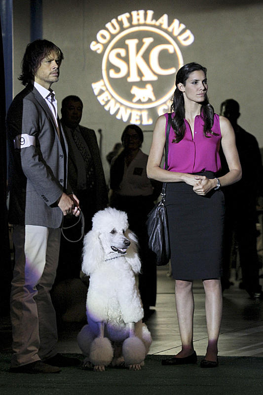 Deeks and Kensi at the Dog Show