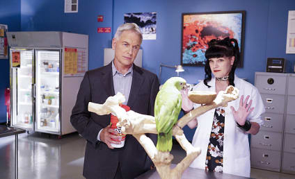 NCIS Season 14 Episode 3 Review: Privileged Information