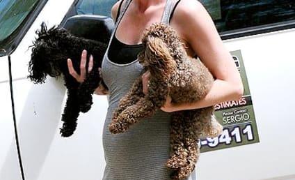 Ellen Pompeo Baby Bump Watch!