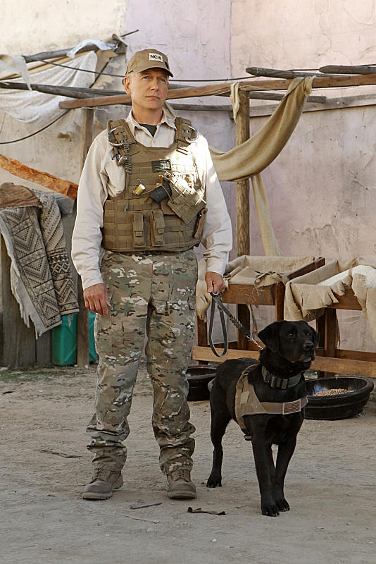 Gibbs and K9 Agent