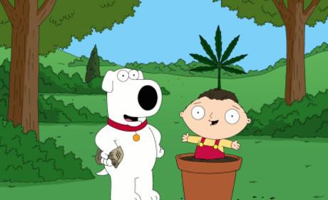 Family Guy 420