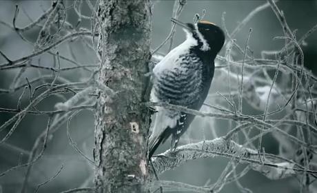 Fargo Season 2 Teaser: For the Birds