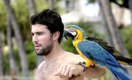 Bird-Brained Brody