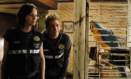 """CSI Review: """"Wild Life"""""""