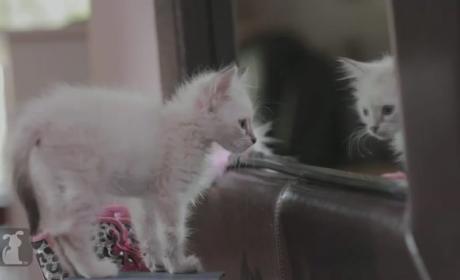 Naturally Adorable Cat Parodies Hannah, Girls