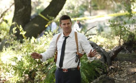 David Boreanaz Campaigns for Role on Downton Abbey