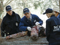 NCIS Season 13 Episode 7