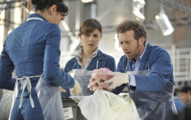 Hodgins in Action