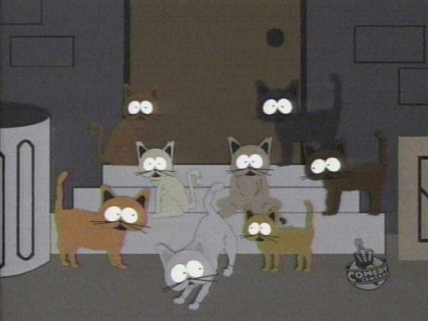 Cat Orgy Picture