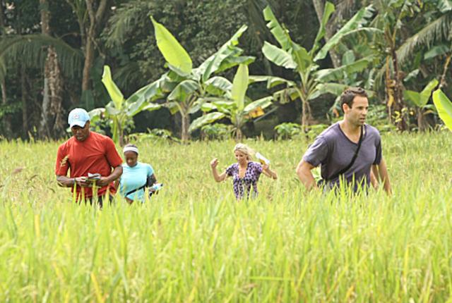 On-a-indonesian-farm