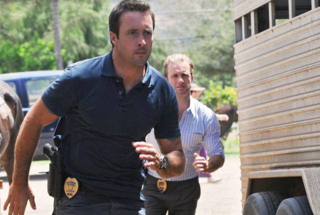 Mcgarrett and danny investigate