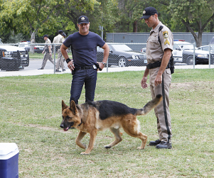 CSI Review: Man's Best Friend