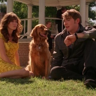 Pushing Daisies Ratings Drop to Season Low
