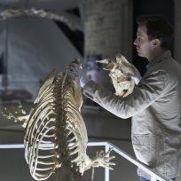 Bones on hannibal