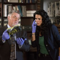 A severed foot rizzoli and isles