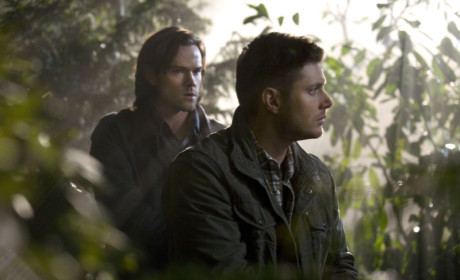 Sam and Dean in the Woods