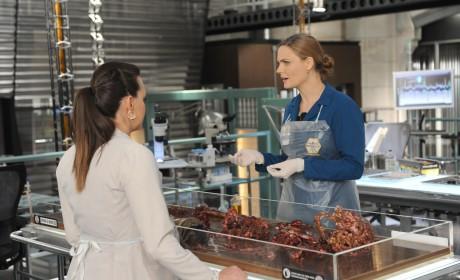 Brennan and Daisy Take a Closer Look at the Remains - Bones Season 10 Episode 8
