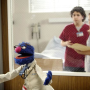 Grover on Scrubs