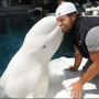 Kiss from a Dolphin