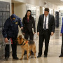 Booth and Brennan Bring in an FBI Dog - Bones Season 10 Episode 12