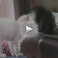 Cats-video-parodies-girls