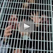 The Walking Dead Zombie Prank