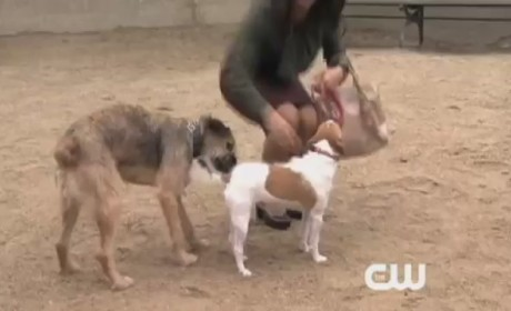 Gossip Girl 'The Fasting and the Furious' Clip: Dog Park Style